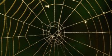 Un nuevo material hecho a base de plantas que imitan las propiedades de la seda de araña promete eliminar los plásticos de un solo uso