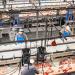 La fábrica danesa Danish Crown enfrentará un juicio por falsear su huella climática causada por la producción de carne de cerdo.