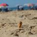 Las colillas de cigarro están hechas de un material que no es fácilmente biodegradable