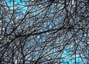 Cerebro Harvard Google