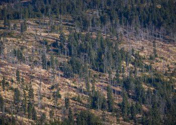 Terraformation reforestación