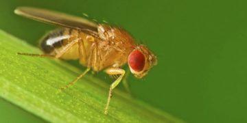 Ante el aumento de las temperaturas por el cambio climático muchas especies verán mermada su capacidad de reproducción