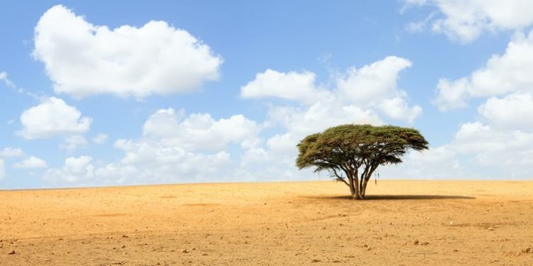 árboles transgénicos