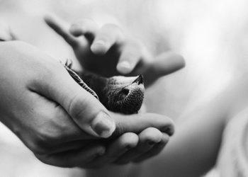 Cada año mueren cientos de millones de aves por las noches, pues las luces artificiales de los edificios las atraen y desorientan