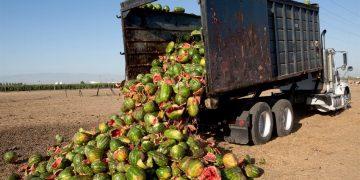 WWF desperdicio alimentos