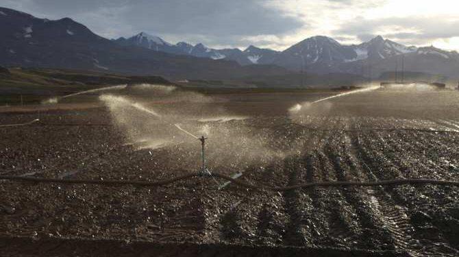 Un experimento utiliza bacterias naturales del suelo para descomponer los contaminantes en bases militares en Groenlandia. Foto: Anders Christian Vestergaard