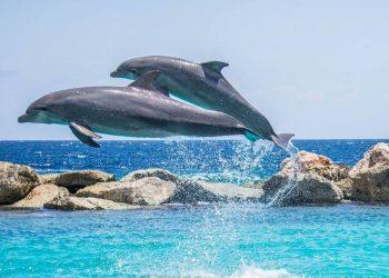 delfines adaptaron esperma