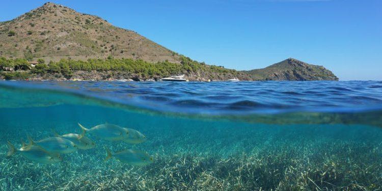 Cap de Creus, Girona, visto desde el mar en el que está previsto el despliegue del parque eólico marino Tramuntana. Shutterstock / Damsea