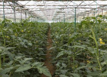 granjas hidropónicas