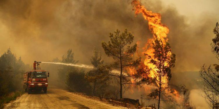 """El aumento de los incendios en Europa """"es la punta del iceberg"""" de la situación de los bosques y del cambio climático"""