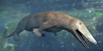 Paleontólogos egipcios hallaron el fósil de una inusual ballena anfibia de cuatro patas