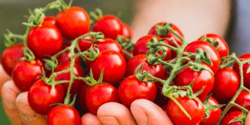 Consumir alimentos ecológicos se relaciona con lo saludable, que protege el medio ambiente, pero los expertos discrepan