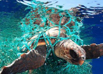 contaminación plástica tortugas