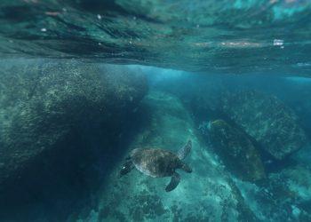 plástico Galápagos