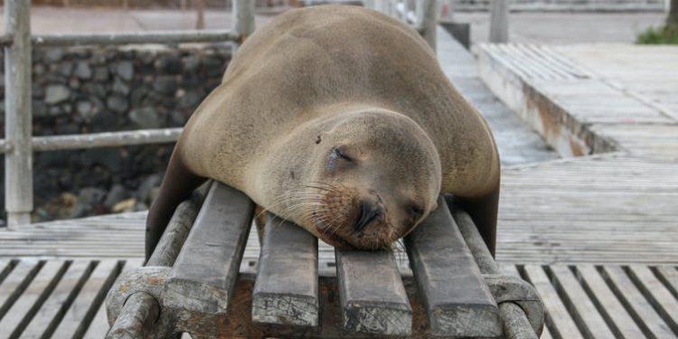 turistas amenaza Galápagos