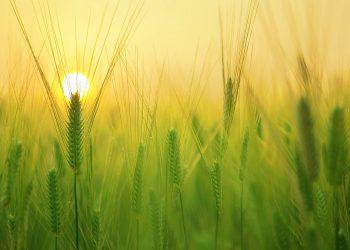 Cambio climático productividad agrícola