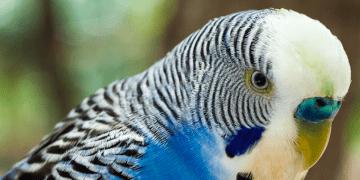 Estudios han demostrado que por el cambio climático algunos animales están cambiando su forma para adaptarse a las altas temperaturas
