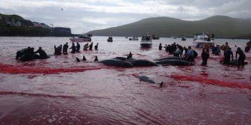 matanza de delfines y ballenas