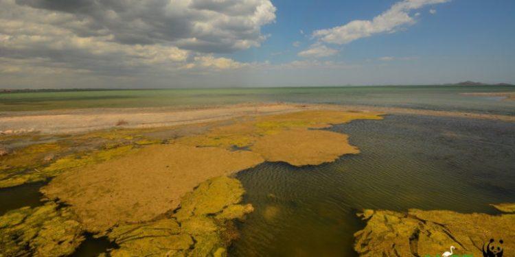 sopa verde Mar Menor