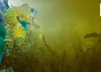 Mar Menor peces muertos