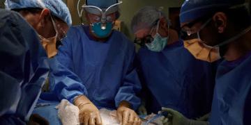Un grupo de cirujanos de Nueva York ha hecho un trasplante de riñón cultivado de un cerdo modificado genéticamente a un paciente humano
